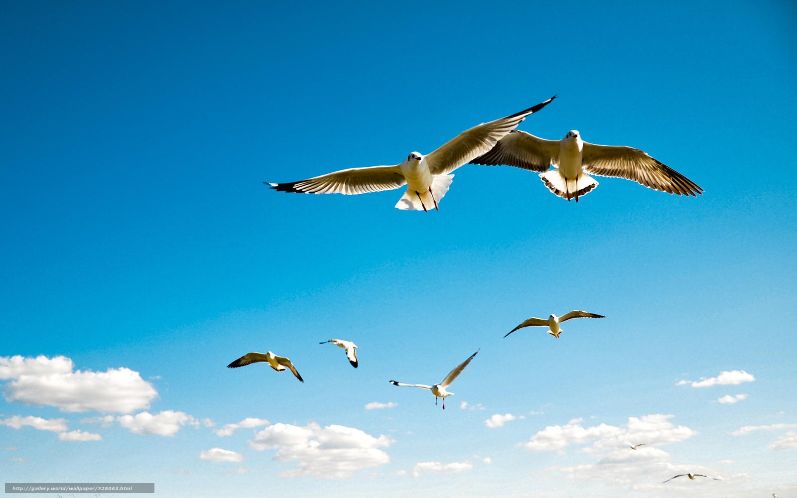 scaricare gli sfondi Uccelli, Gabbiani, cielo, Albatro ...