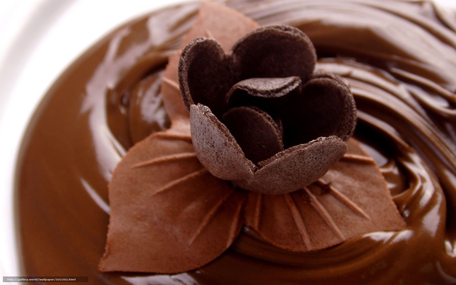 Download wallpaper food sweet the chocolate chocolate flower brown backgr