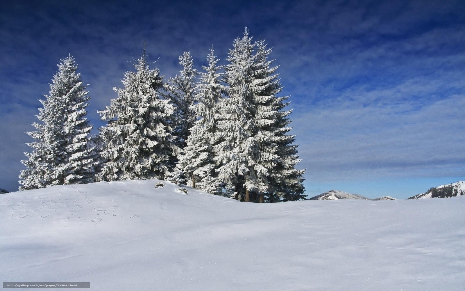 Scaricare gli sfondi inverno neve abete sfondi gratis for Immagini inverno sfondi