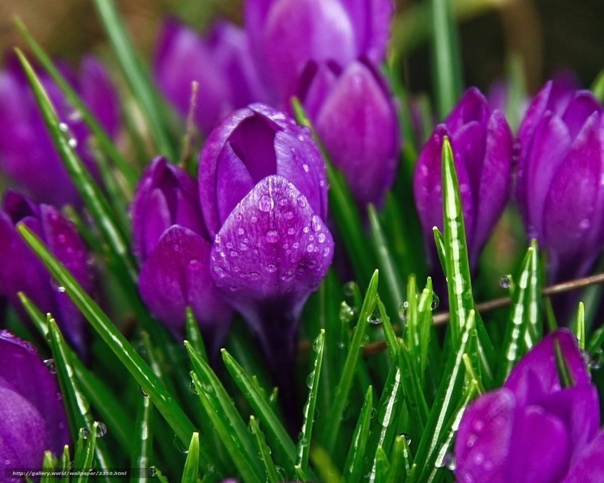 Цветы 3350 ручное изменение размера