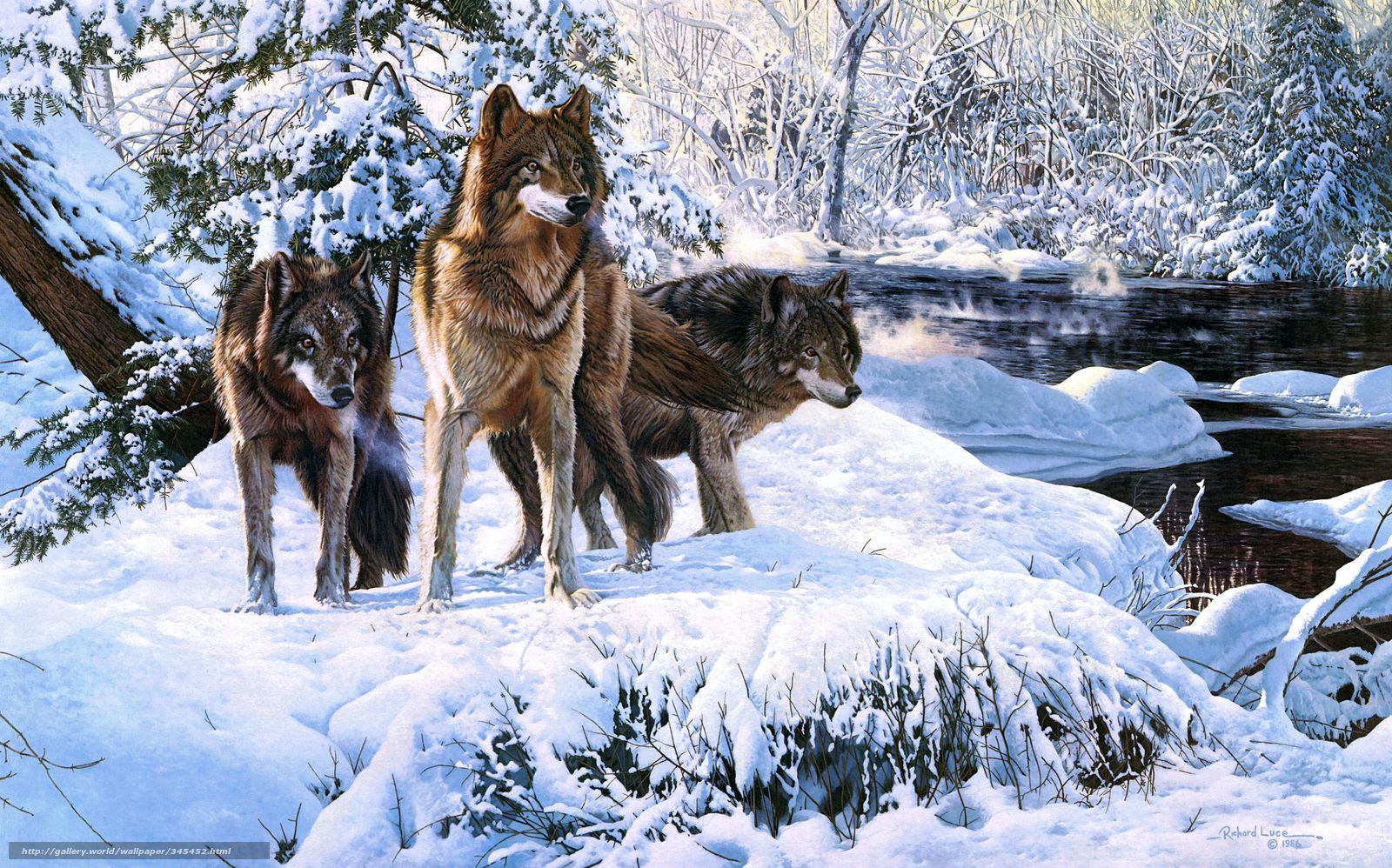 Tlcharger fond d 39 ecran loups hiver neige animaux fonds for Fond ecran hiver animaux