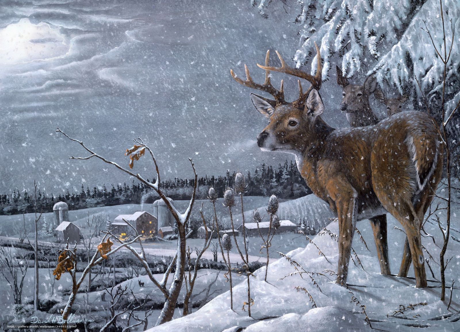 Winter Wallpaper With Deer Download wallpaper david h bollman Deer Winter snow free
