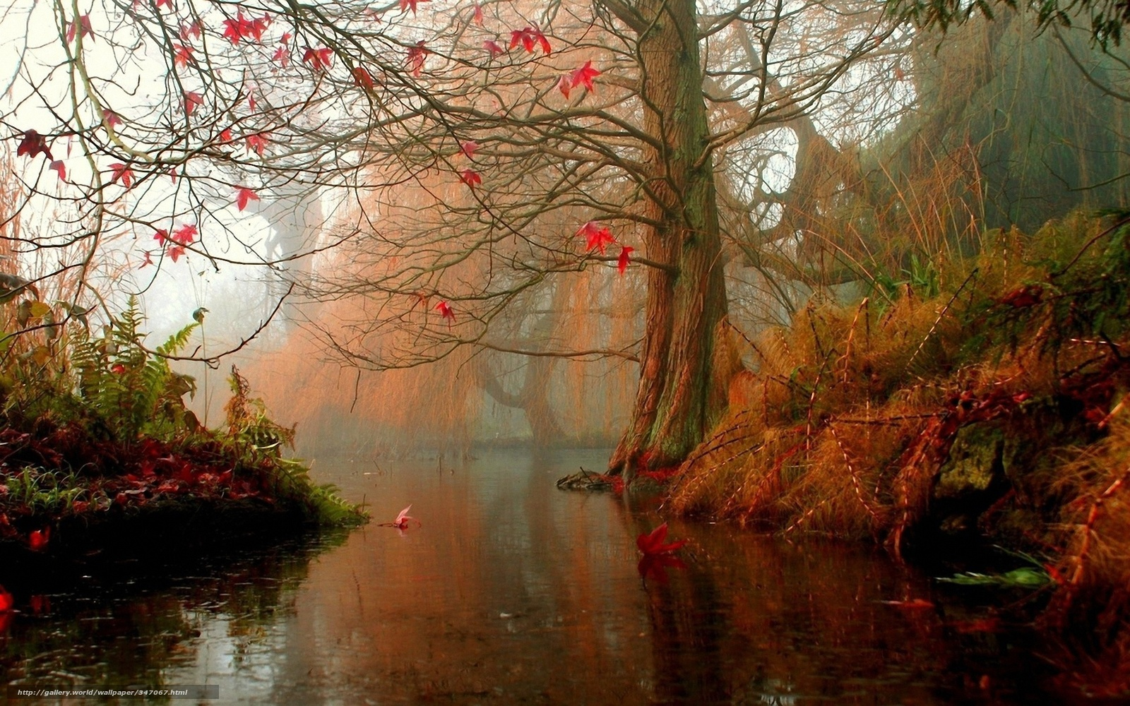 Download wallpaper autumn, forest, river free desktop wallpaper in