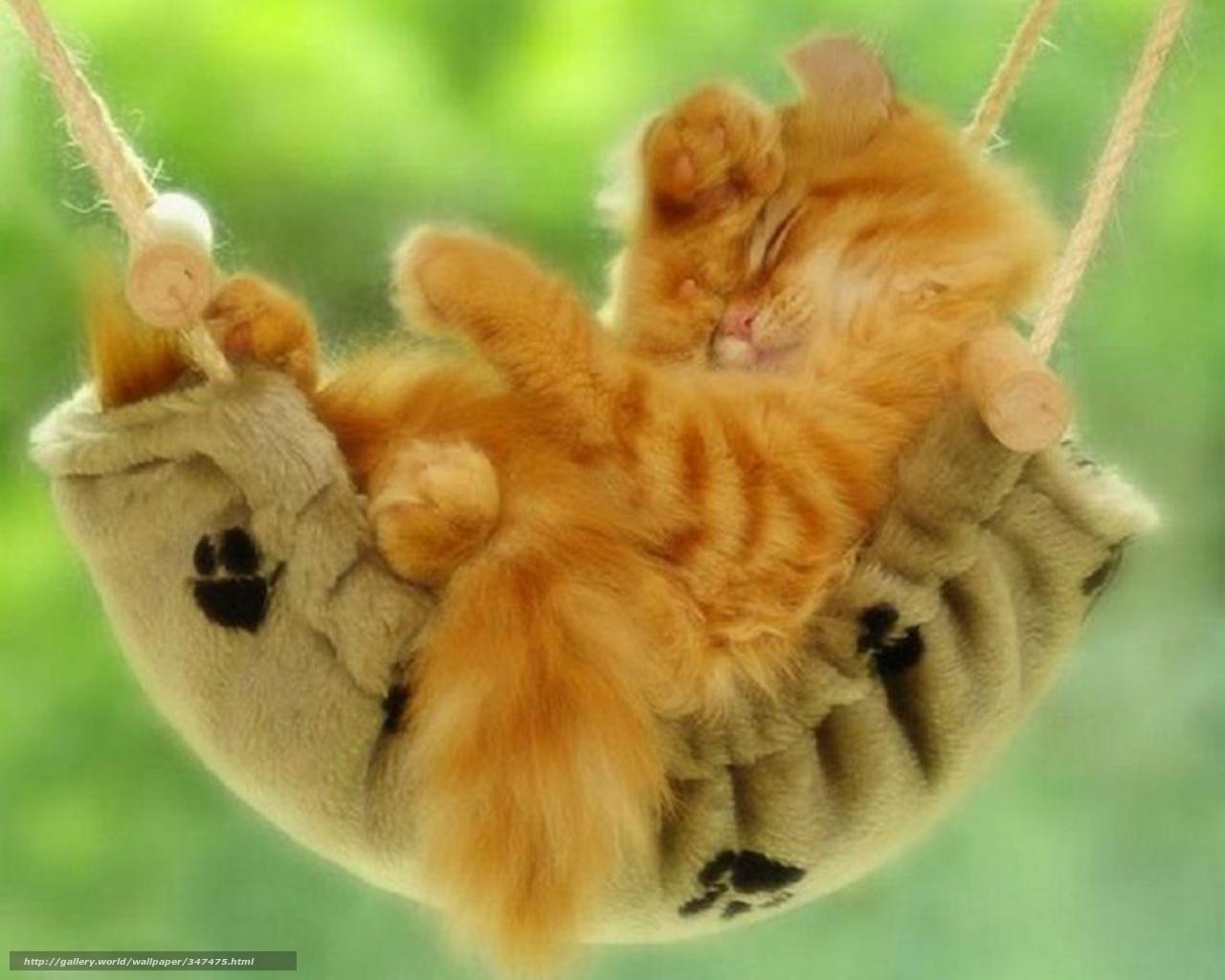 Scaricare gli sfondi animali gatto amaca riposo sfondi for Animali desktop