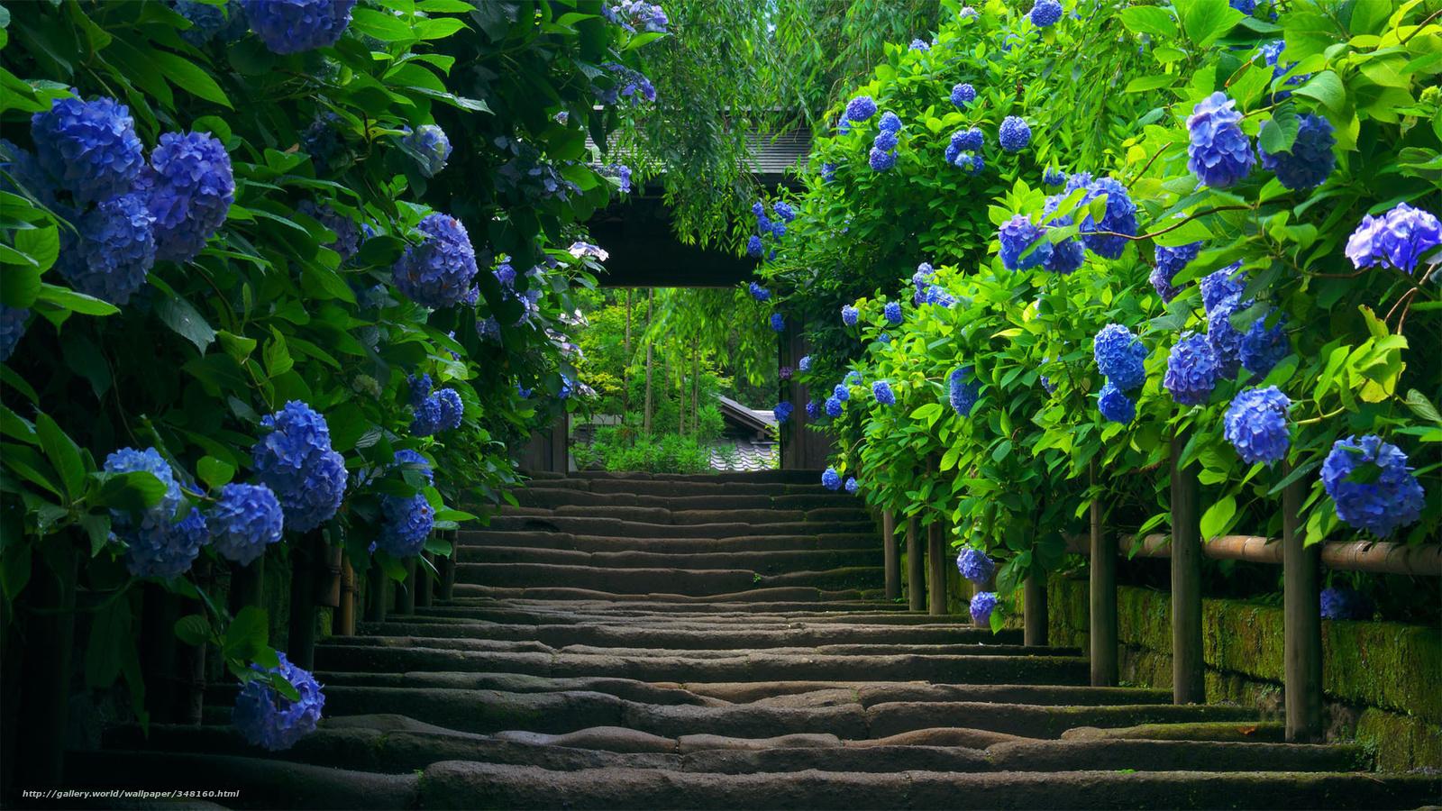 Foto Gratis Flores Fondo Naturaleza: Descargar Gratis Escalera, Flores, Arbustos, Naturaleza
