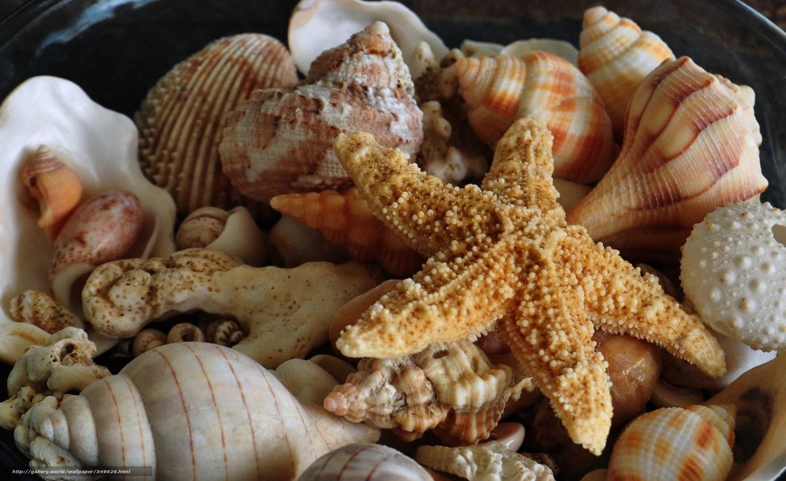 Descargar gratis Naturaleza, Mundo Marino, estrella de mar, conchas ...