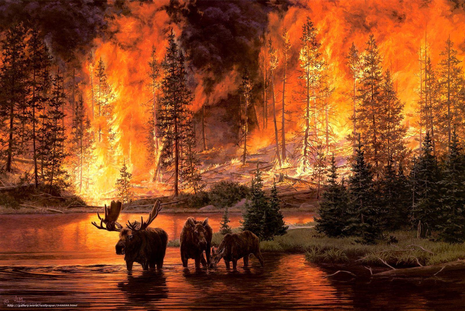 Обои jim tschetter пожар огонь пожар в лесу