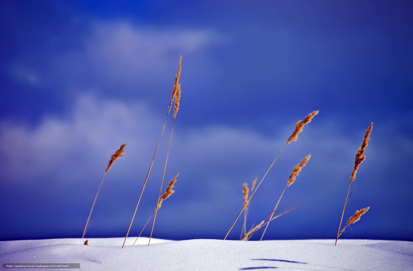 tlcharger fond d 39 ecran ciel neige l 39 herbe sche dcoule fonds d 39 ecran gratuits pour votre. Black Bedroom Furniture Sets. Home Design Ideas