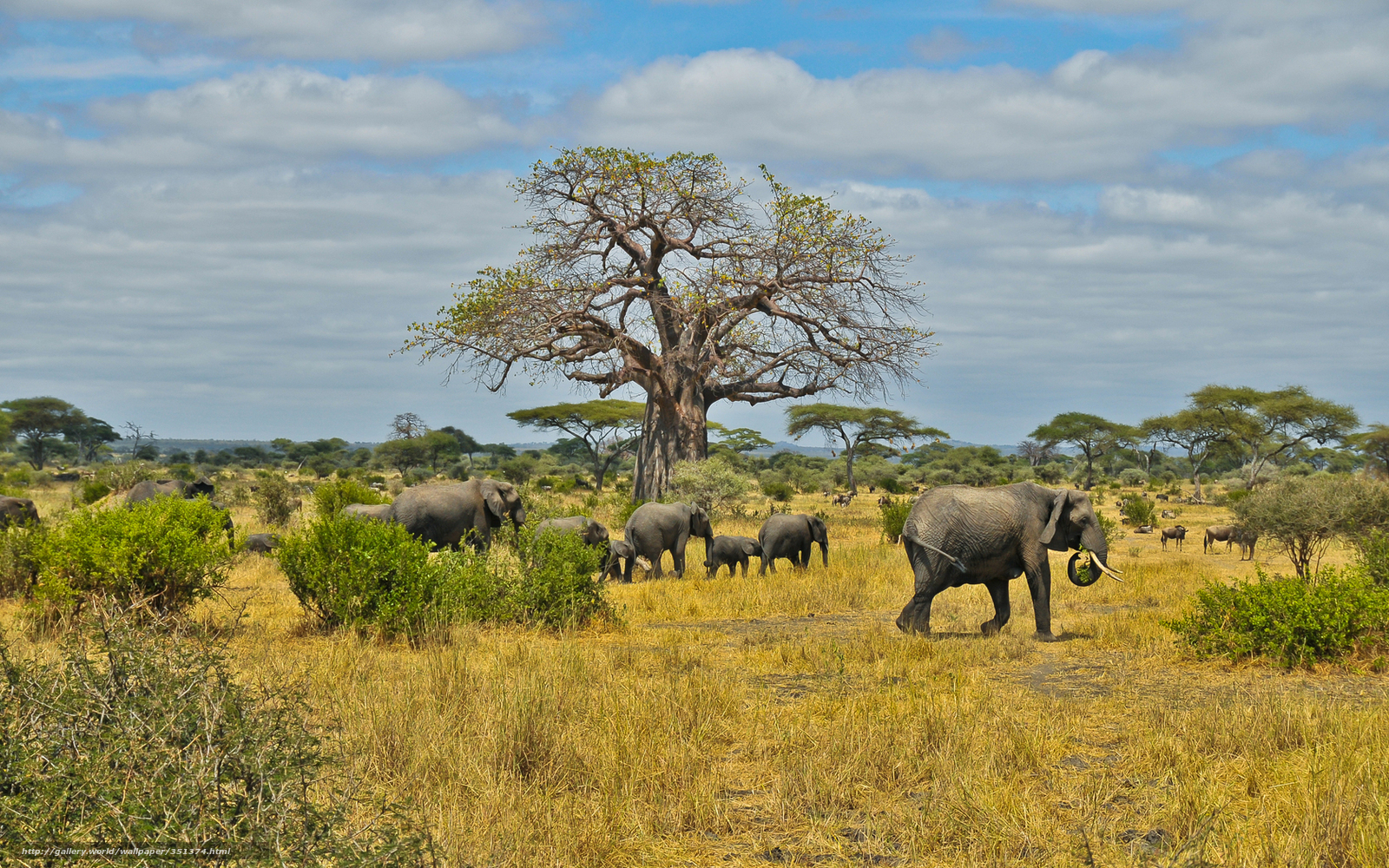 Download wallpaper Africa, savannah, Elephants, herd free desktop
