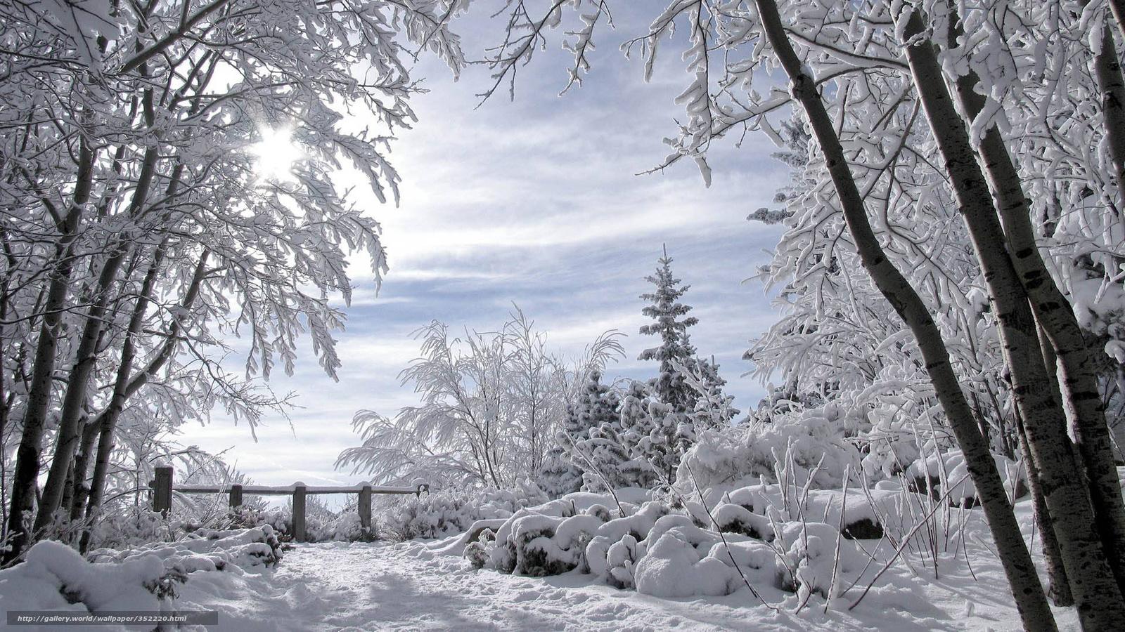 Scaricare gli sfondi paesaggio invernale alberi coperti for Sfondi gratis desktop inverno