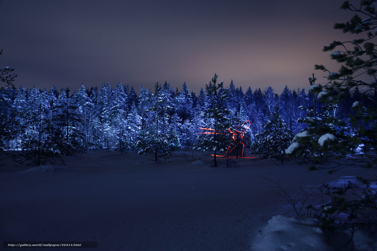 Download wallpaper winter, forest, night, silhouette free ...