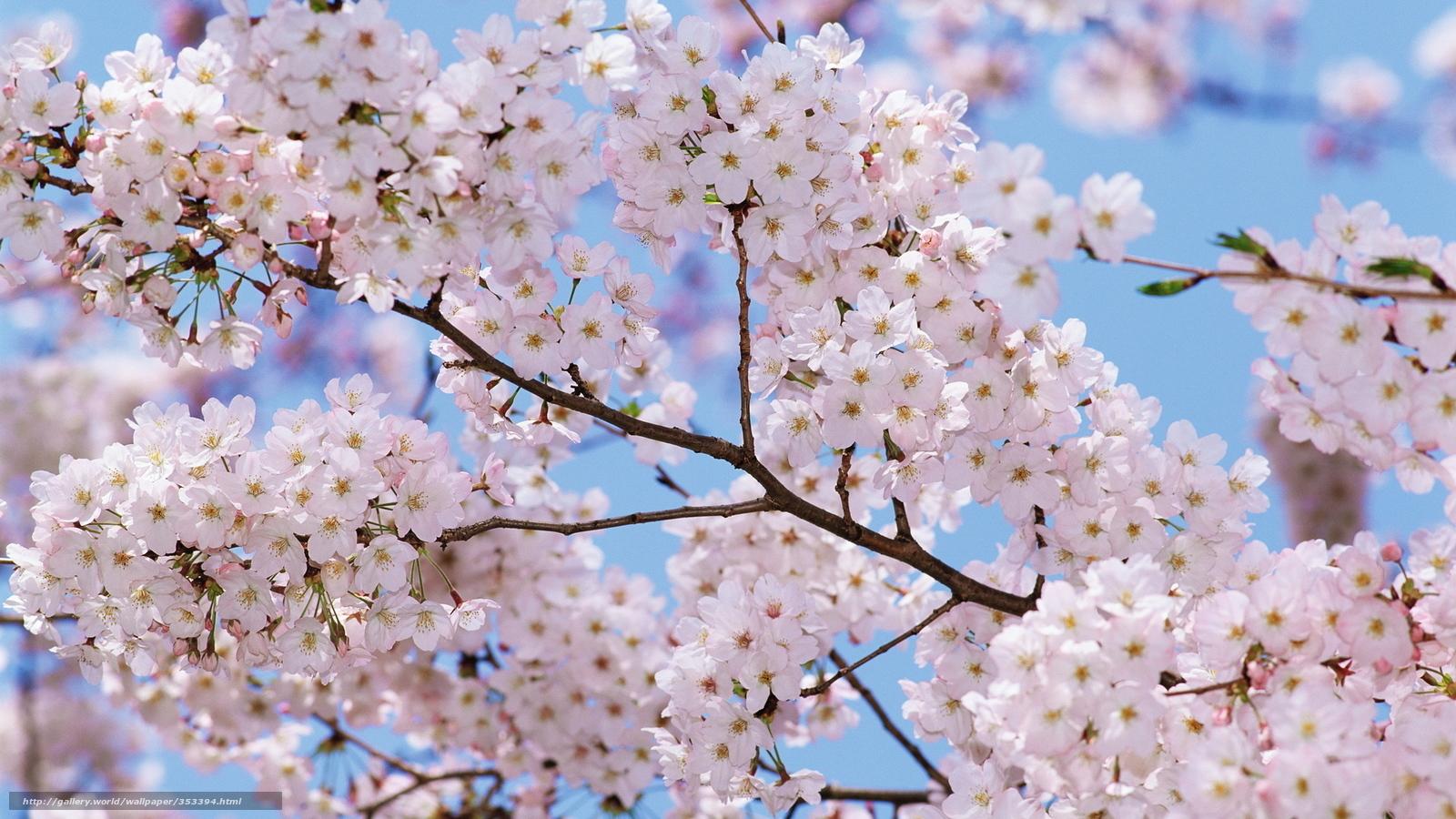Scaricare gli sfondi fiori primavera alberi sfondi for Sfondi pc primavera