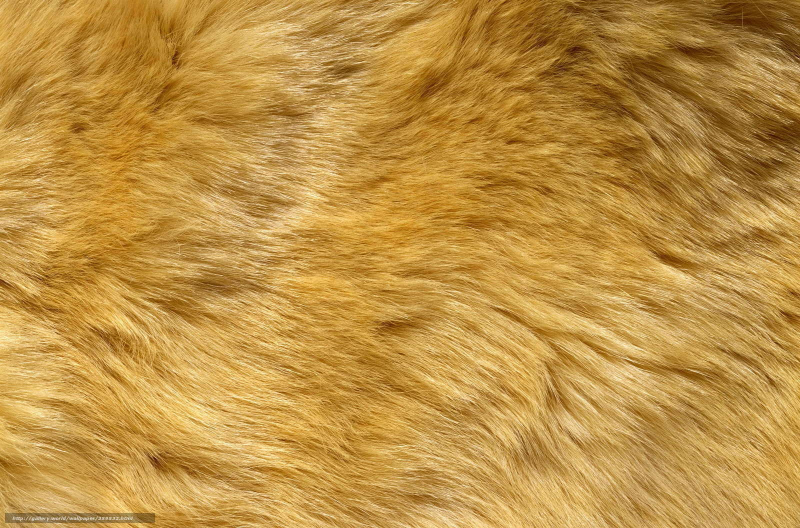 Download wallpaper texture,  fur,  background in business free desktop wallpaper in the resolution 2560x1690 — picture №359532