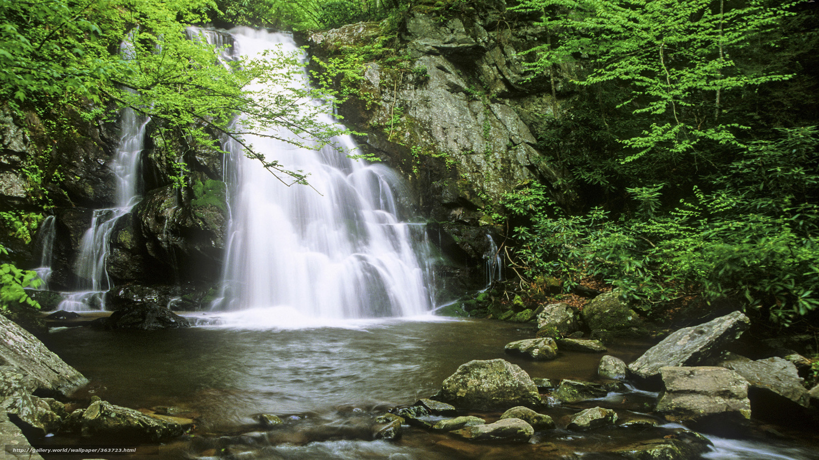 Download wallpaper waterfall, forest, greens free desktop