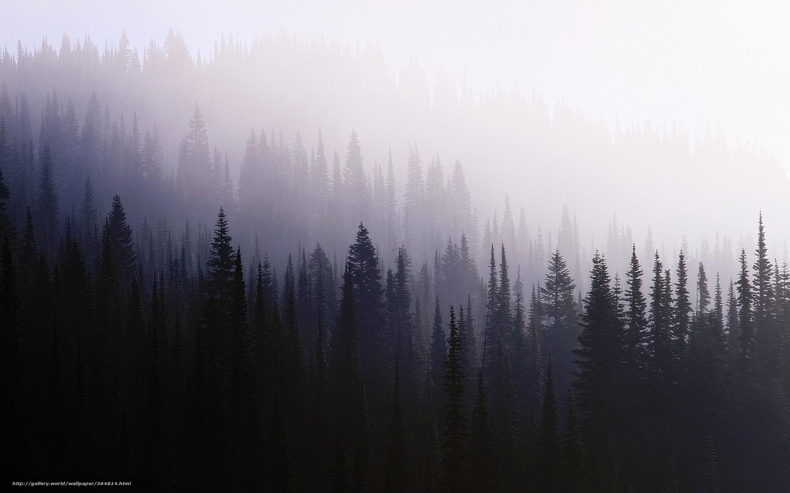 Скачать обои лес, фон, хвойные, туман ...: ru.gde-fon.com/download/les_fon_xvojnye_tuman/364814/1680x1050