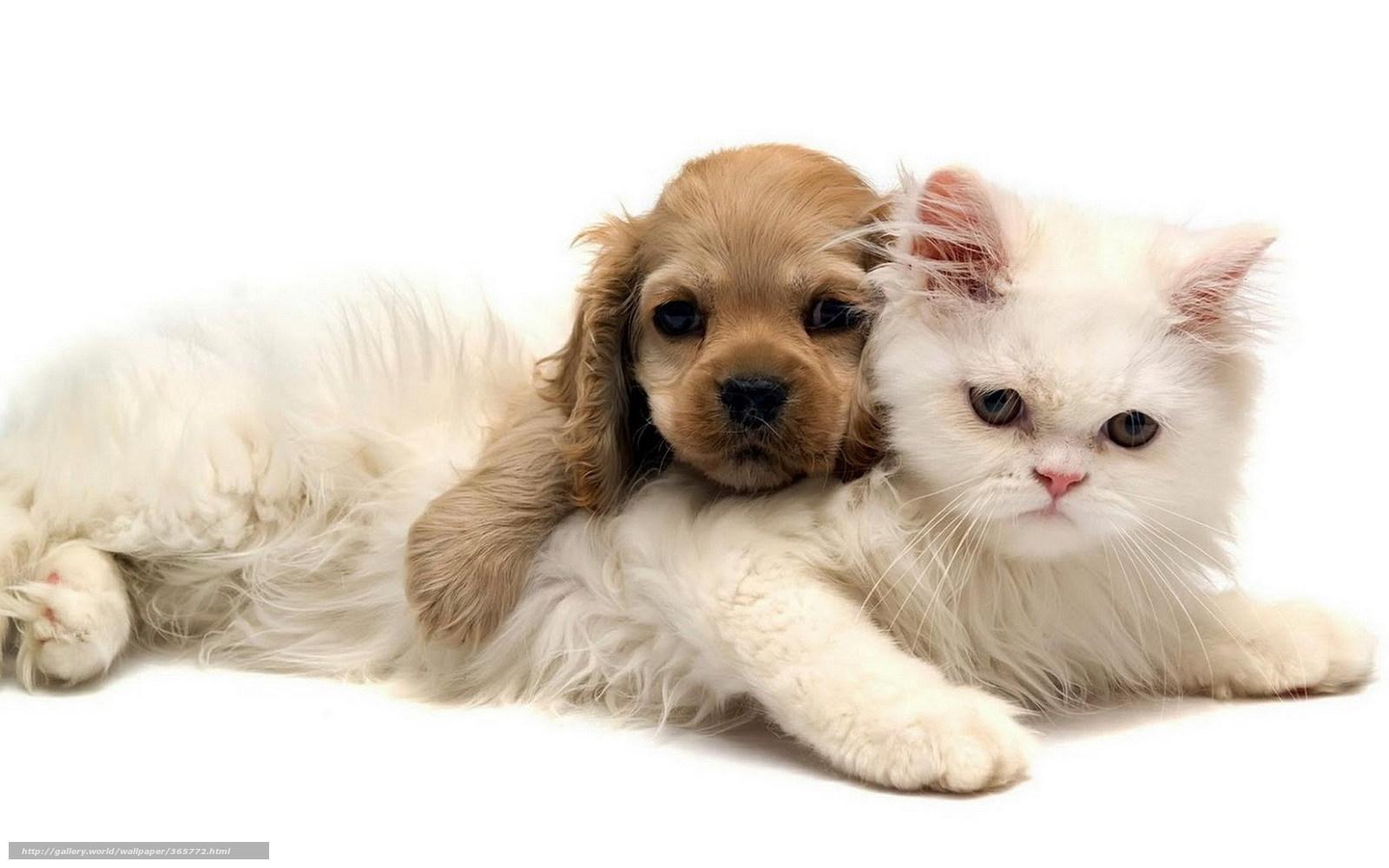 Tlcharger fond d 39 ecran chaton chiot animaux fonds d for Fond ecran chiot