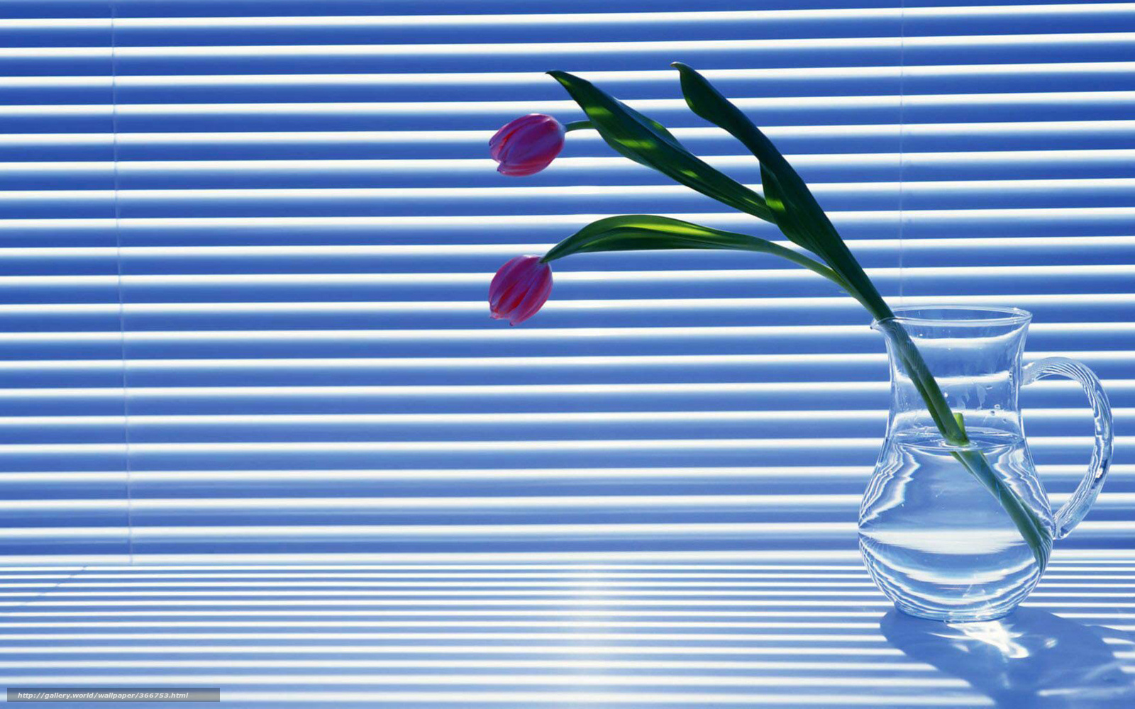 Download wallpaper Tulips, red, White, Venetian blinds free desktop ...