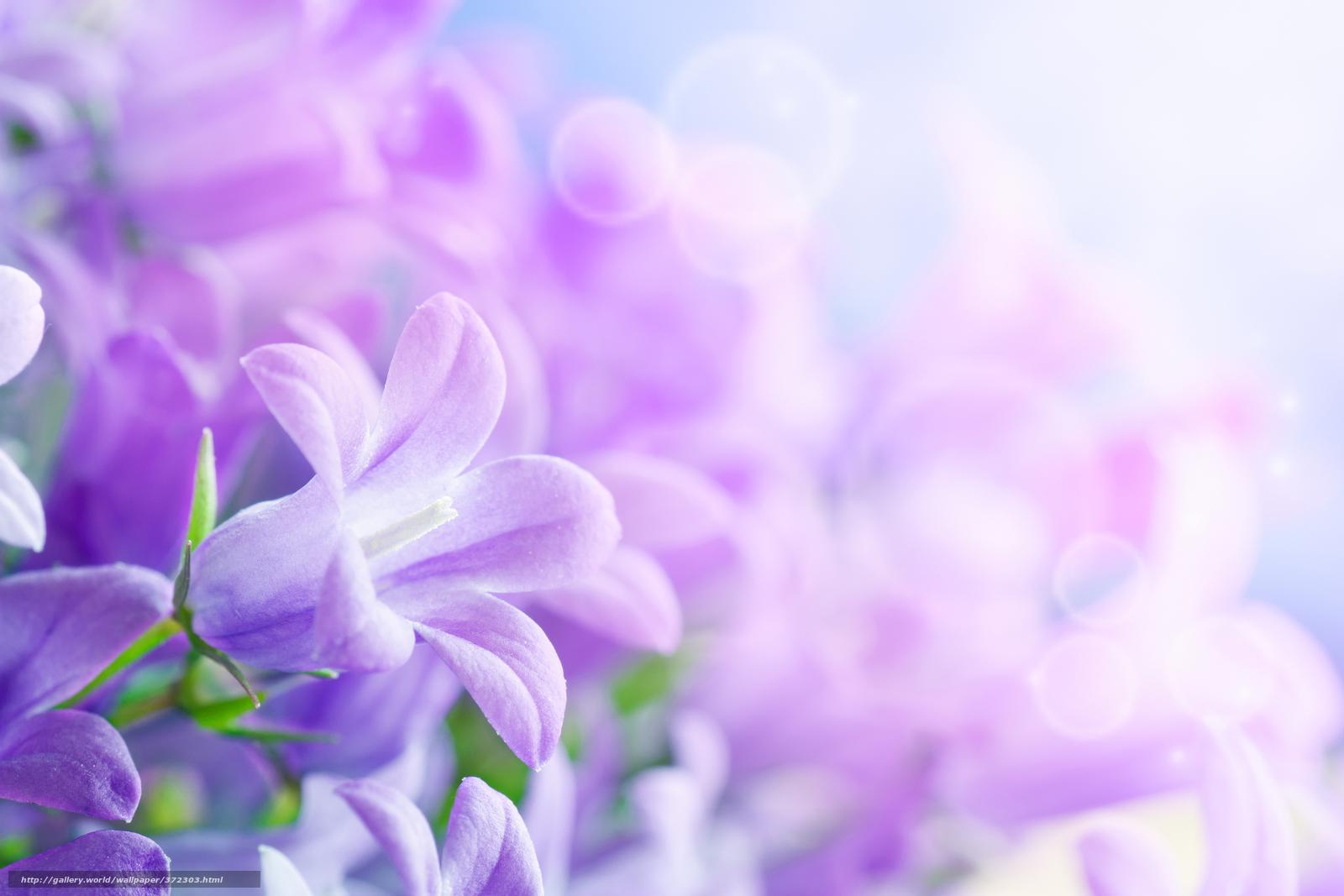 Скачать обои цветы, красивые, лепестки ...: ru.gdefon.com/download/cvety_krasivye_lepestki_listki_vsemirnyj...