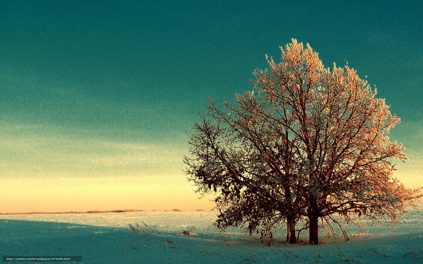 Scaricare gli sfondi inverno neve alberi fogliame di for Desktop gratis inverno