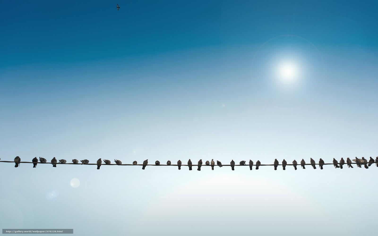 Download wallpaper birds wire sky free desktop wallpaper - Wallpaper picture ...
