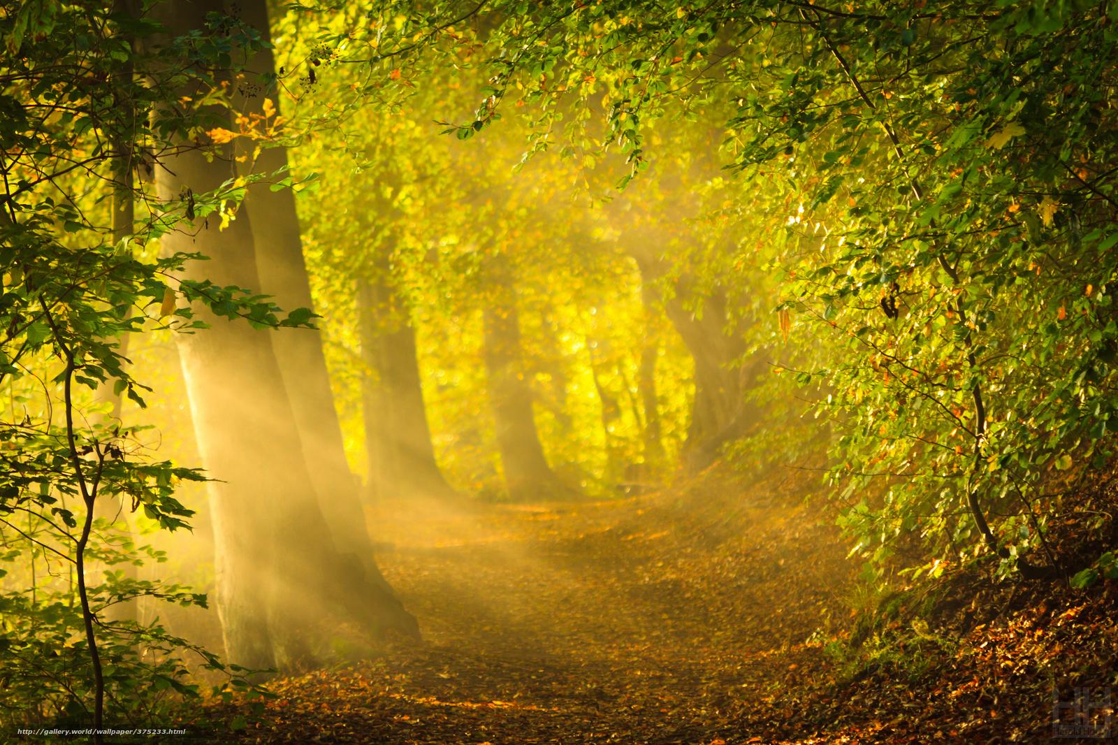 Скачать обои природа ранняя осень