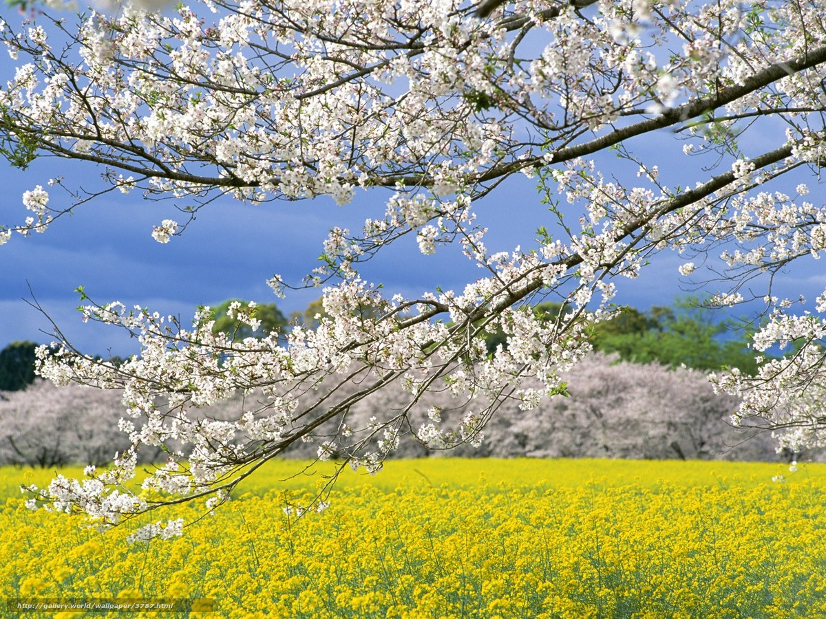 Dreamer passion primavera for Immagini primavera desktop