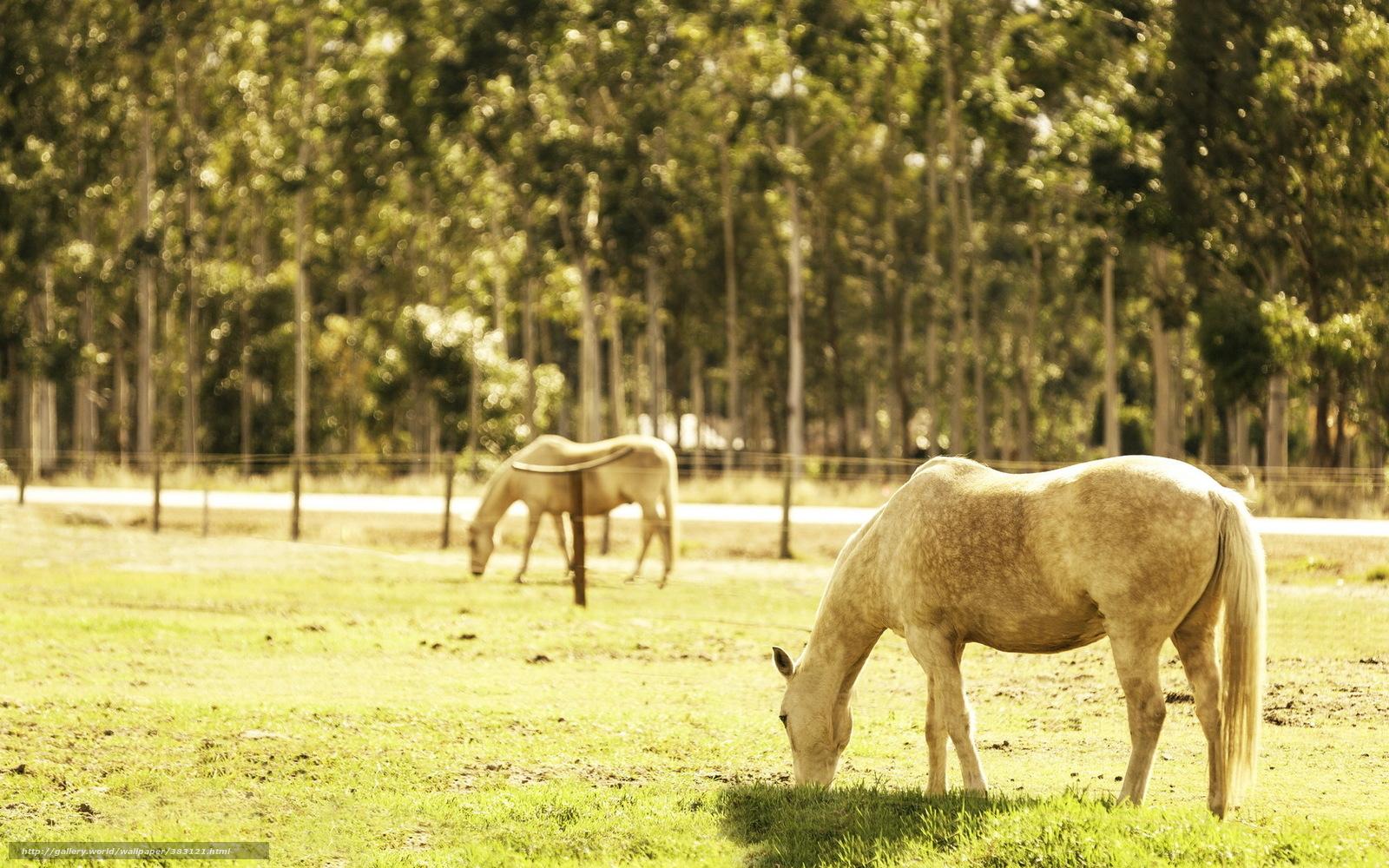 Download Wallpaper Horses, Field, Summer, Light Free