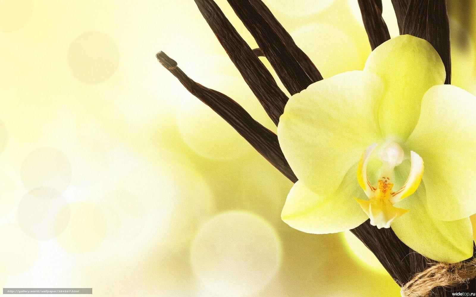 download hintergrund orchidee gelb schn blumen freie desktop tapeten in der auflosung. Black Bedroom Furniture Sets. Home Design Ideas