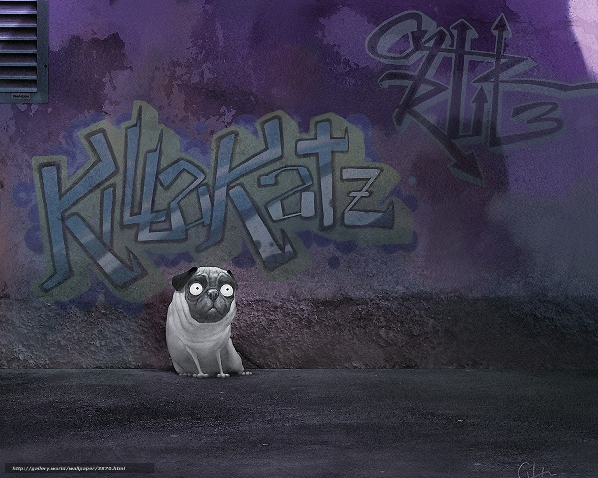 Download wallpaper graffiti, pug, wall free desktop wallpaper in