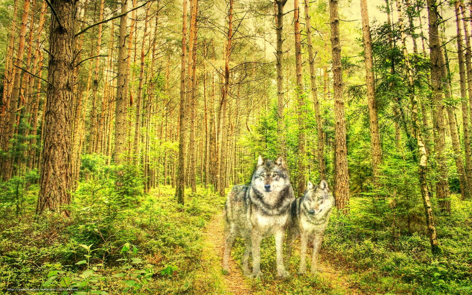 Обои рабочего стола волки