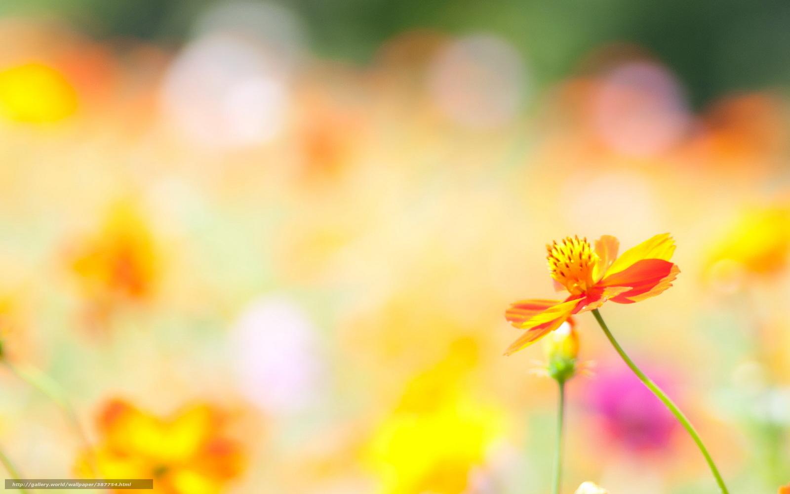 Descargar gratis flor verano naturaleza luz fondos de escritorio en la resolucin 1680x1050 - Fondos de escritorio verano ...