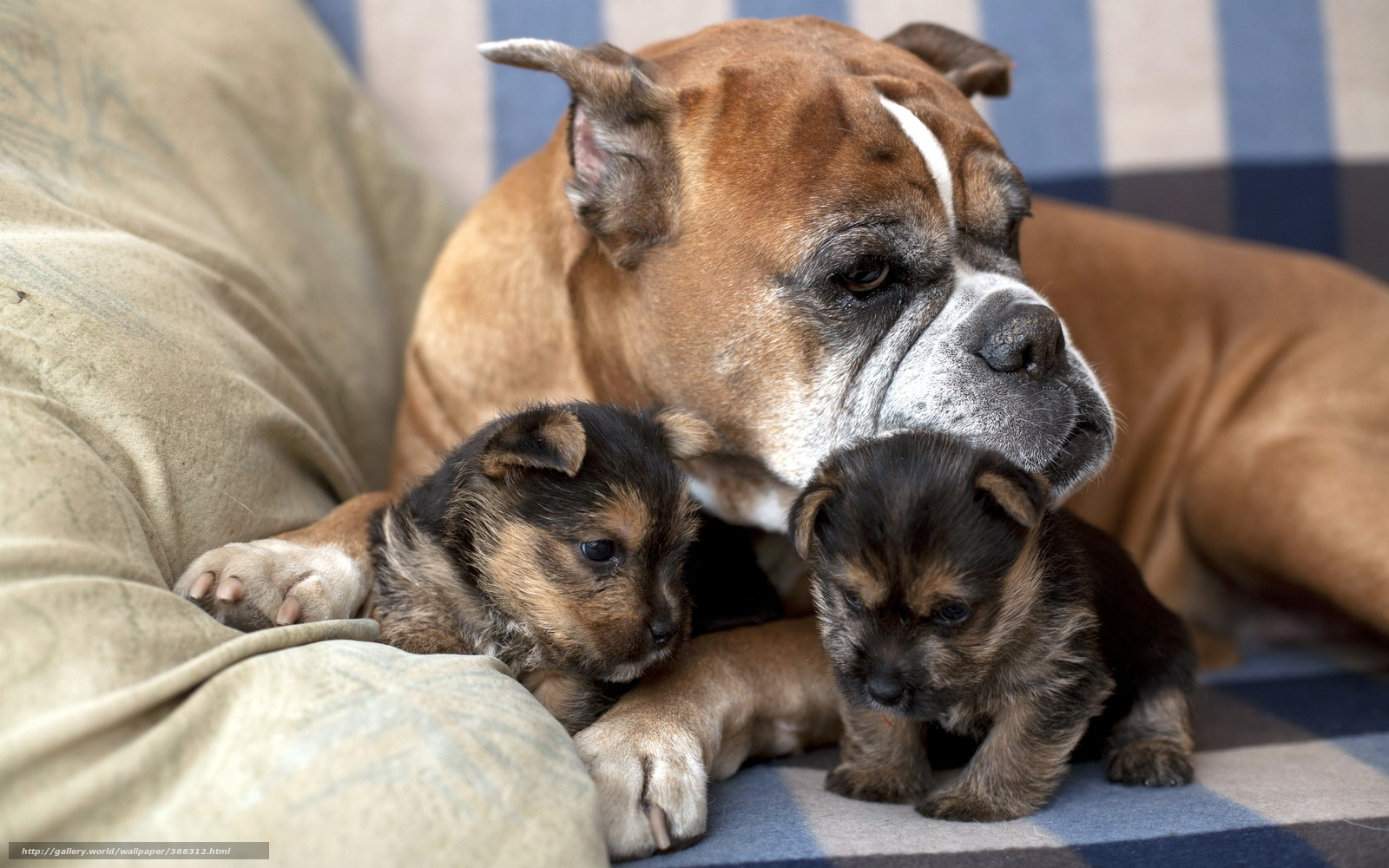 Mom Dog Carrying Puppy