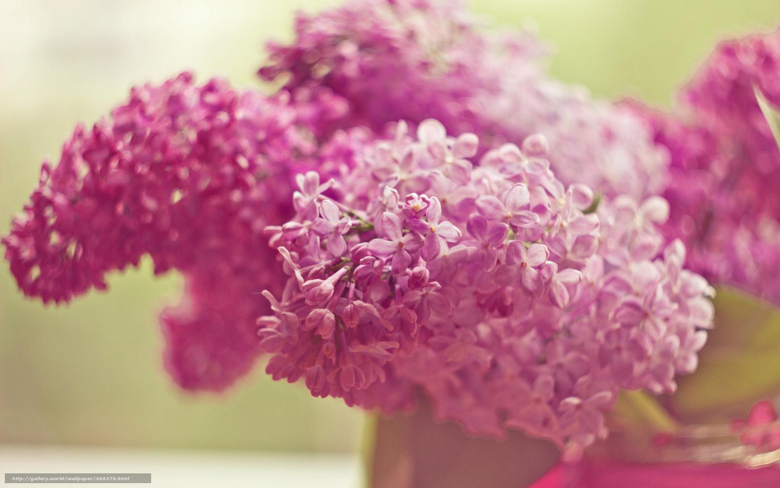 download hintergrund flieder rosa blumen freie desktop. Black Bedroom Furniture Sets. Home Design Ideas
