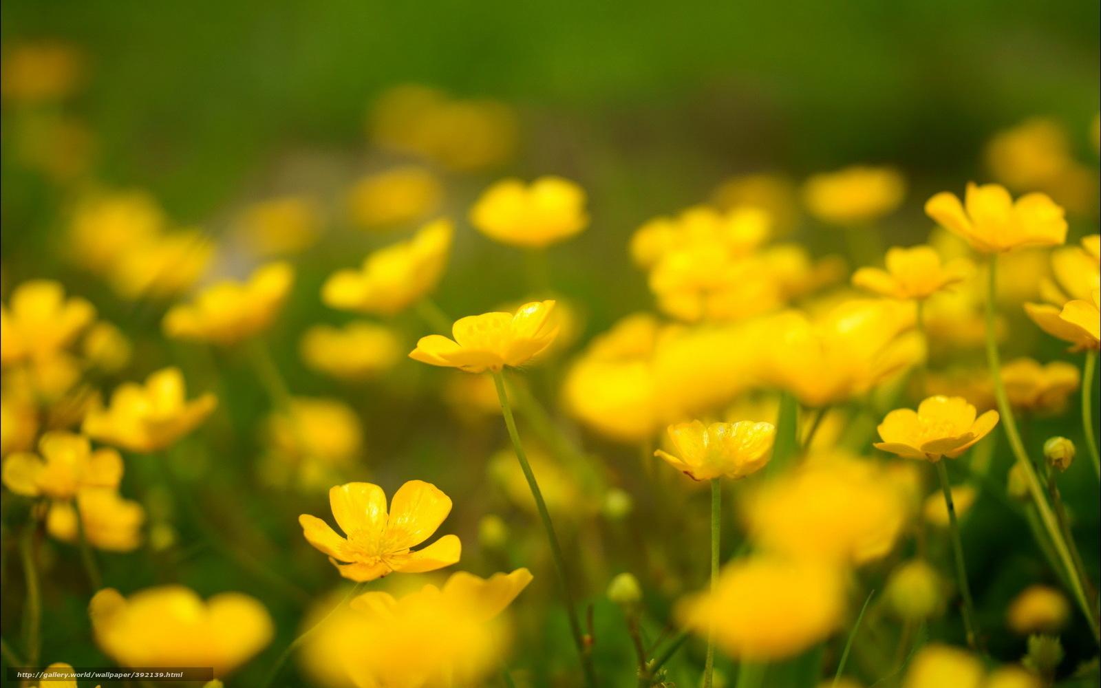 Scaricare gli sfondi primavera fiori campo natura for Sfondi desktop primavera