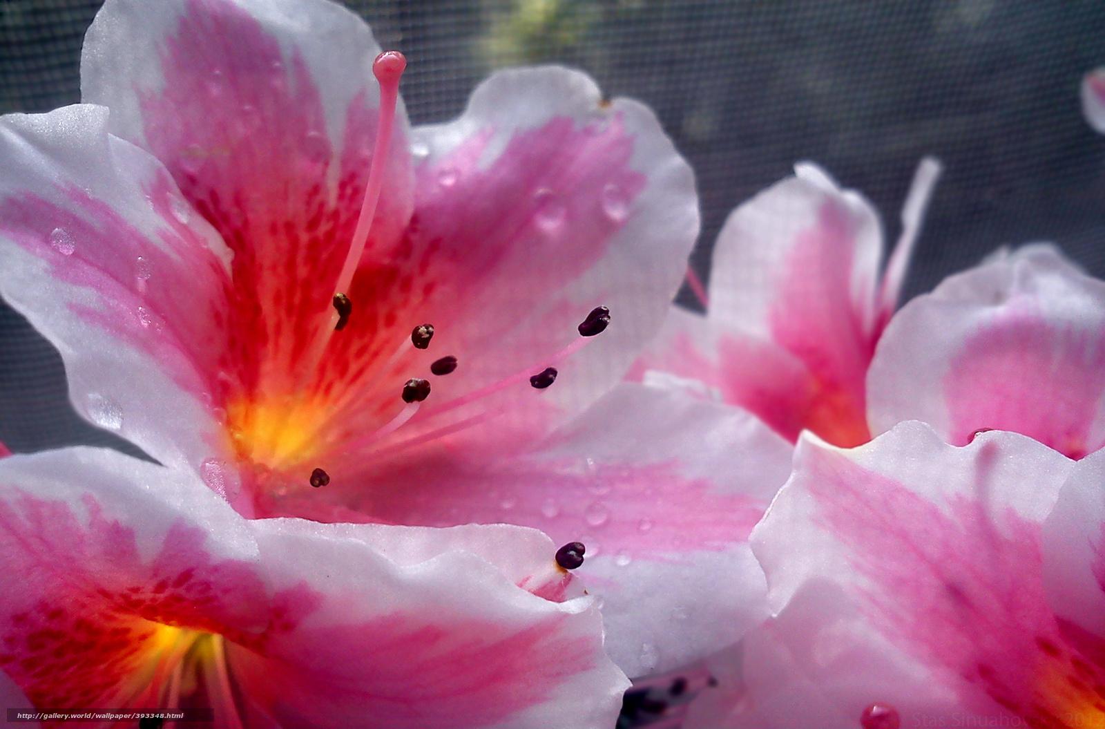 Scaricare gli sfondi fiori impianto macro sfondi gratis for Sfondi desktop fiori