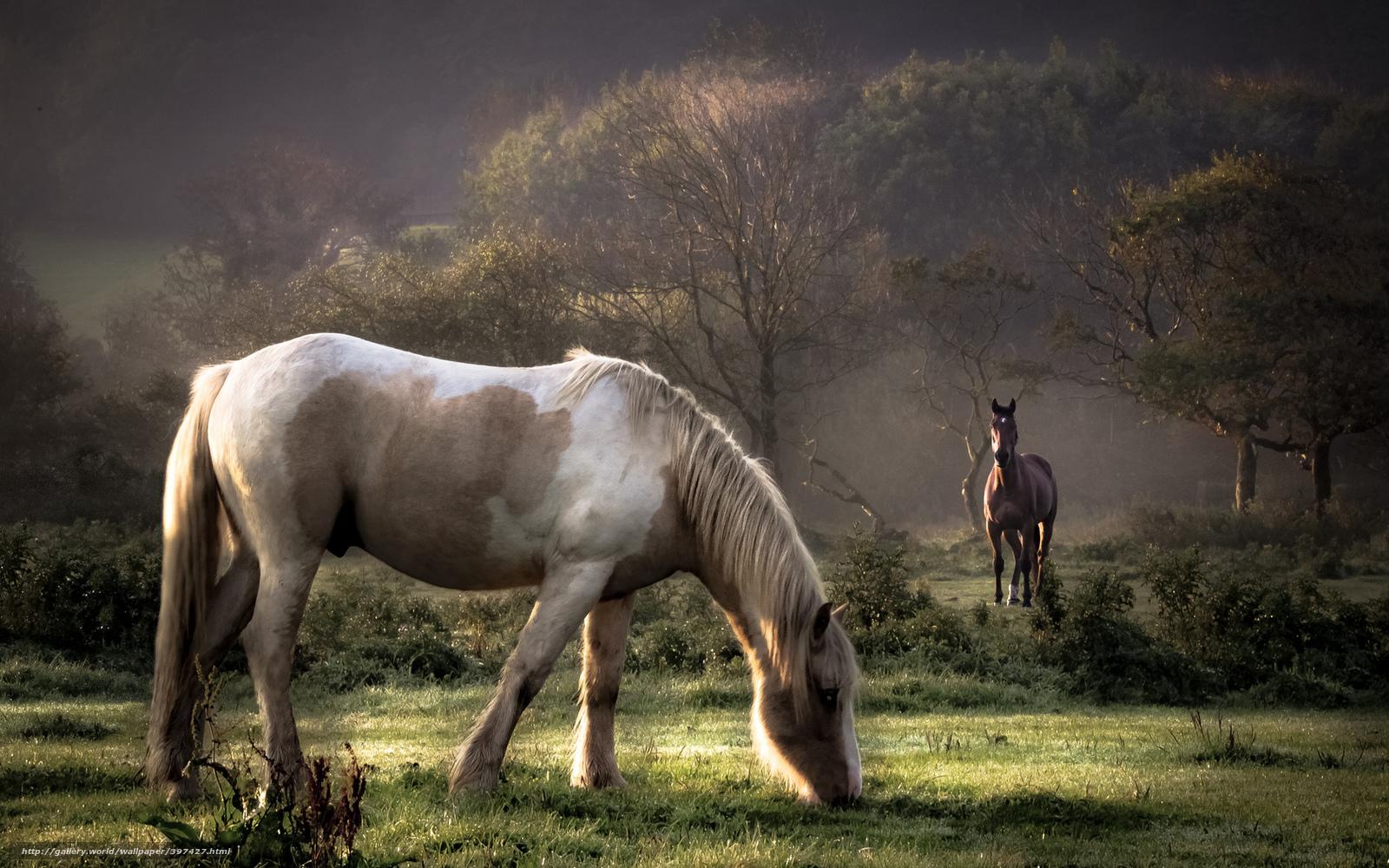 love horses pasture wallpaper - photo #8
