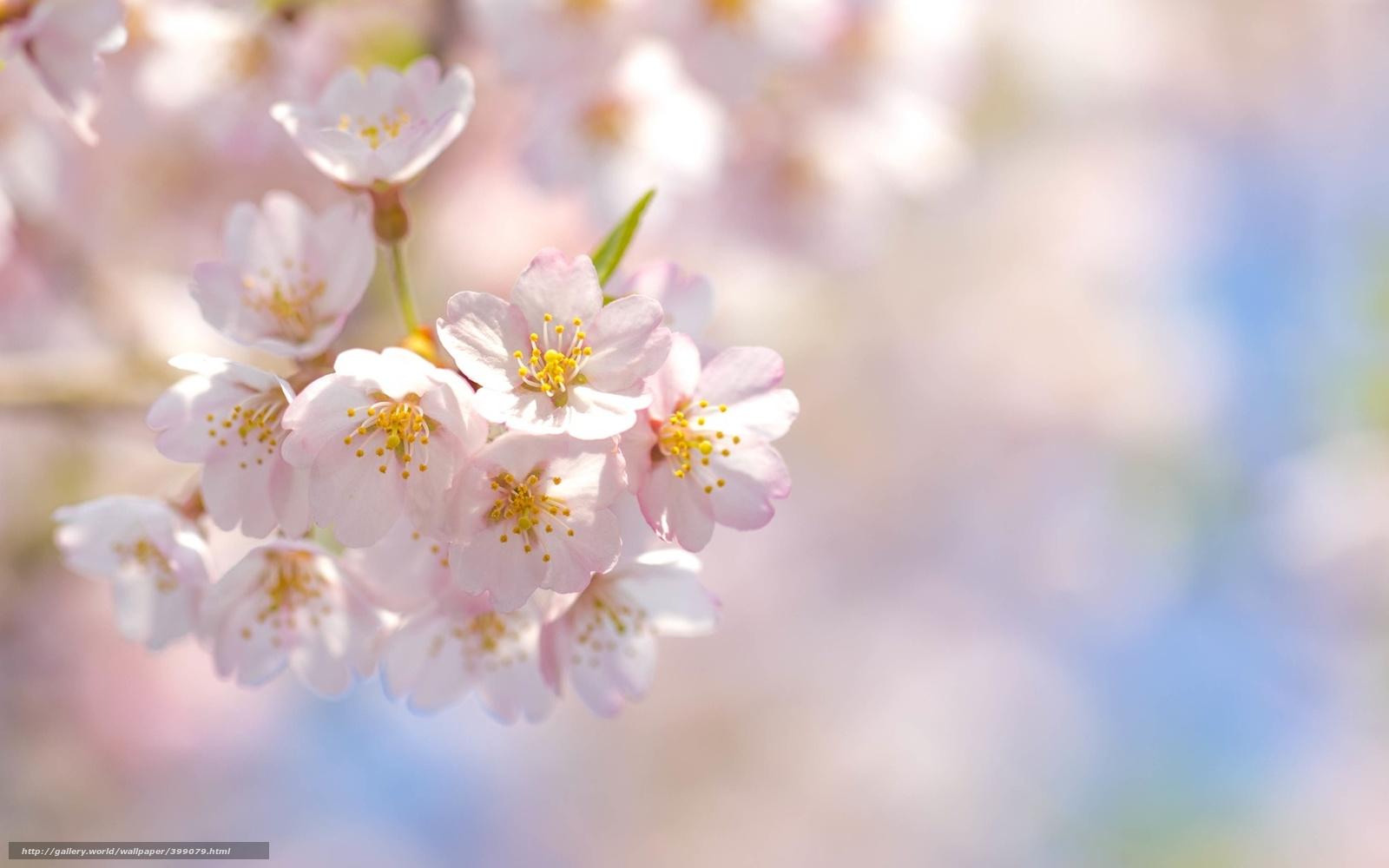 Фото в пастельных тонах цветы 95
