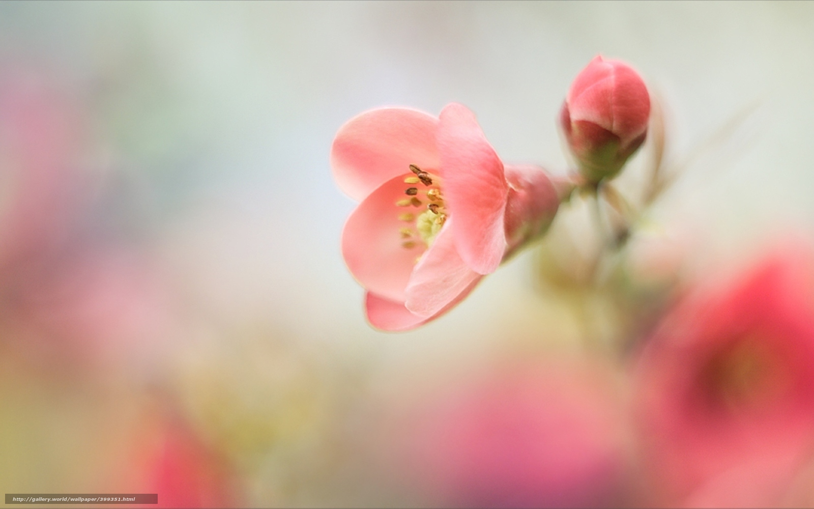 Цветы hd обои на рабочий стол
