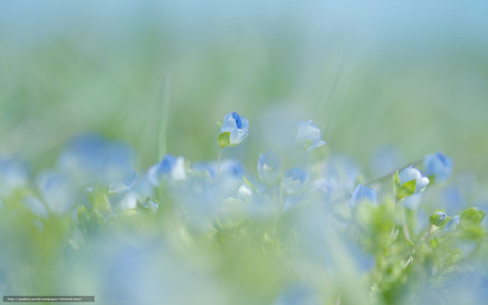 butter spring blue wallpaper - photo #46