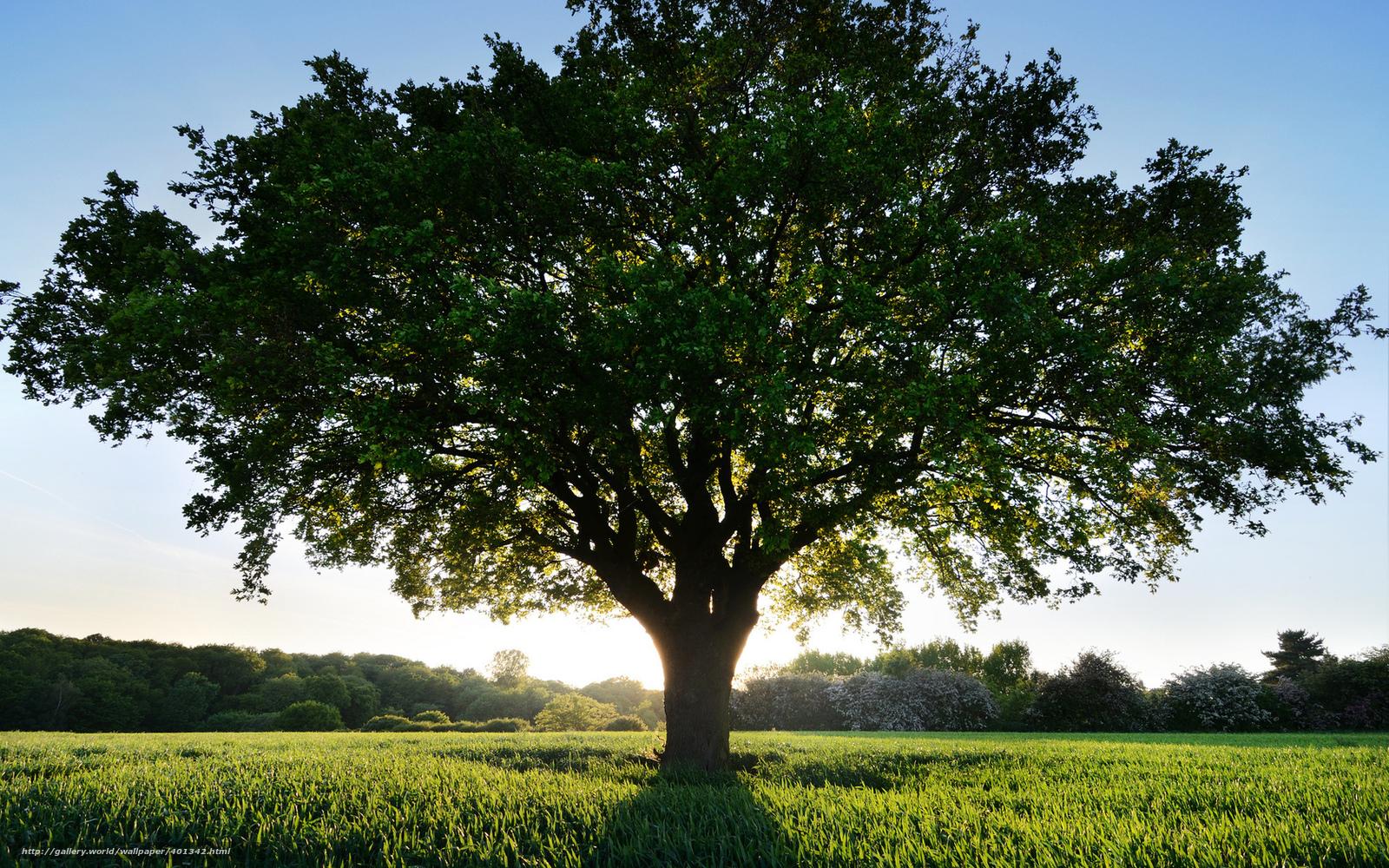 Солнце дерево