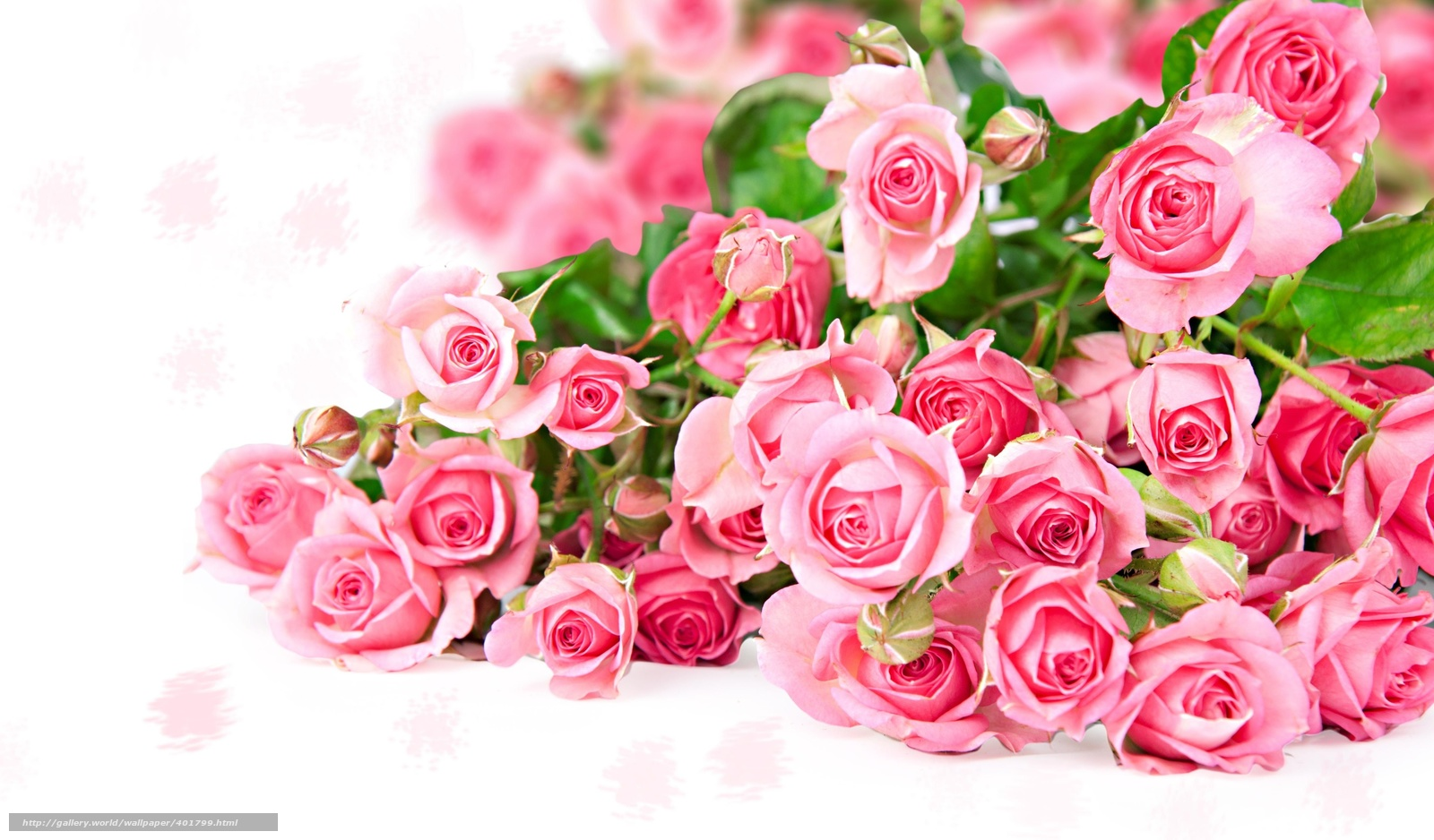 Обои для рабочего стола скачать бесплатно цветы розы 15