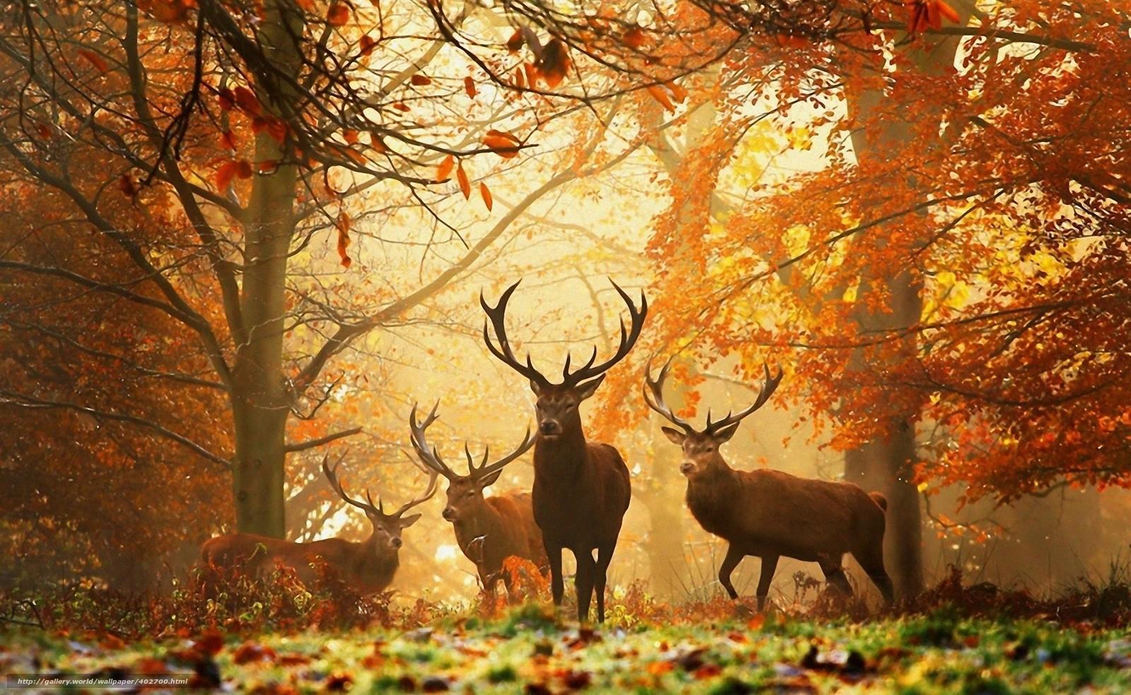 Животные / Фото №402700...