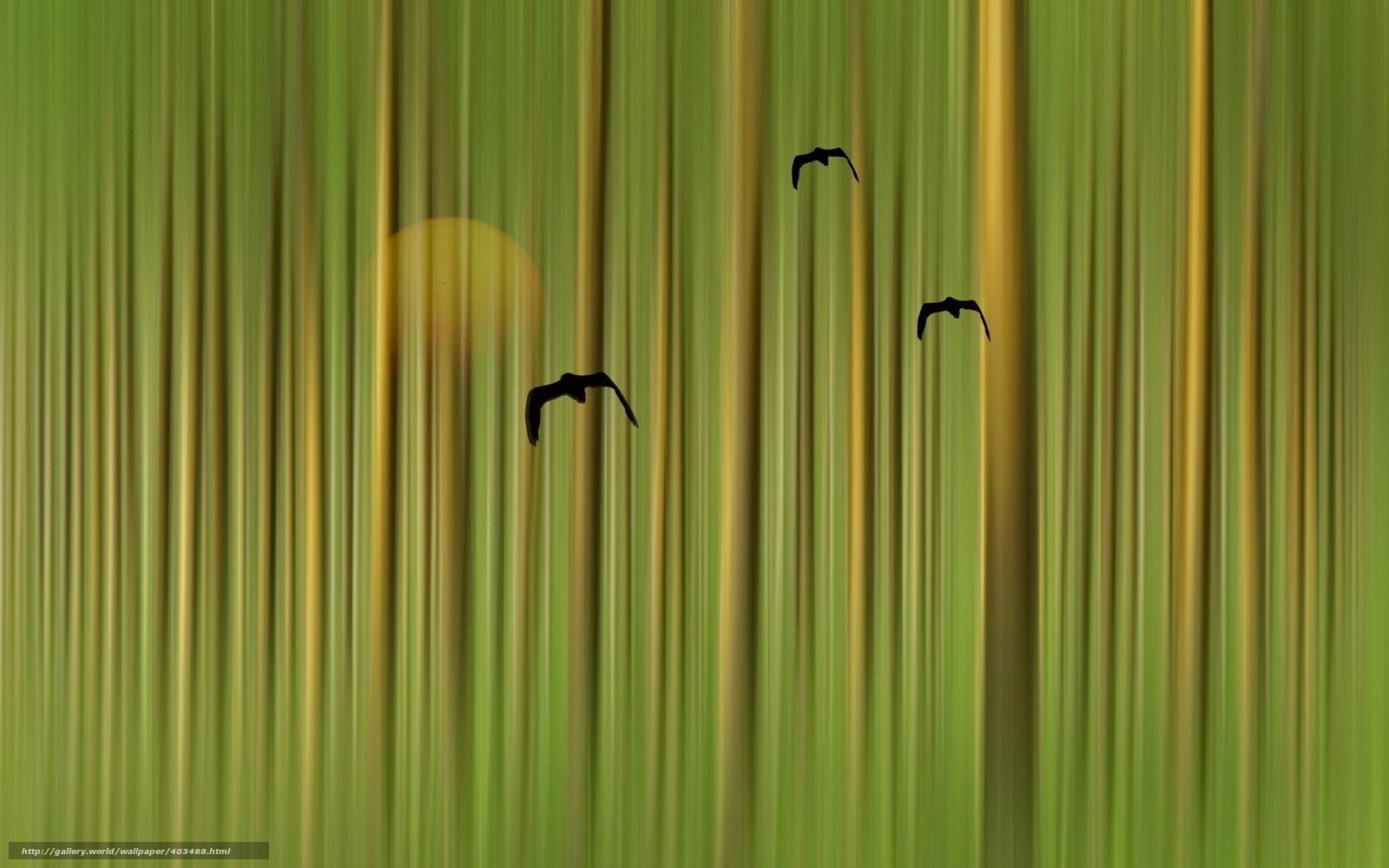 Tlcharger fond d 39 ecran oiseaux fond couleur style fonds for Fond decran style