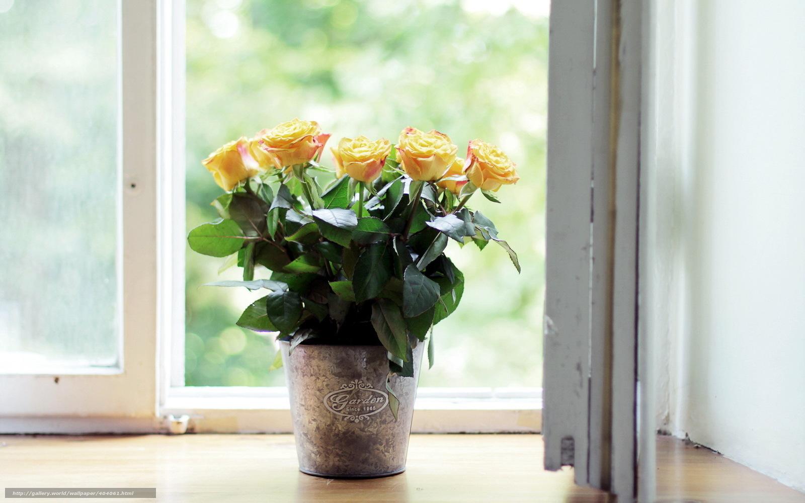 http://www.gdefon.ru/wallpapers/404061_zheltye-rozy_okno_podokonnik_vedro_1680x1050_(www.GdeFon.ru).jpg