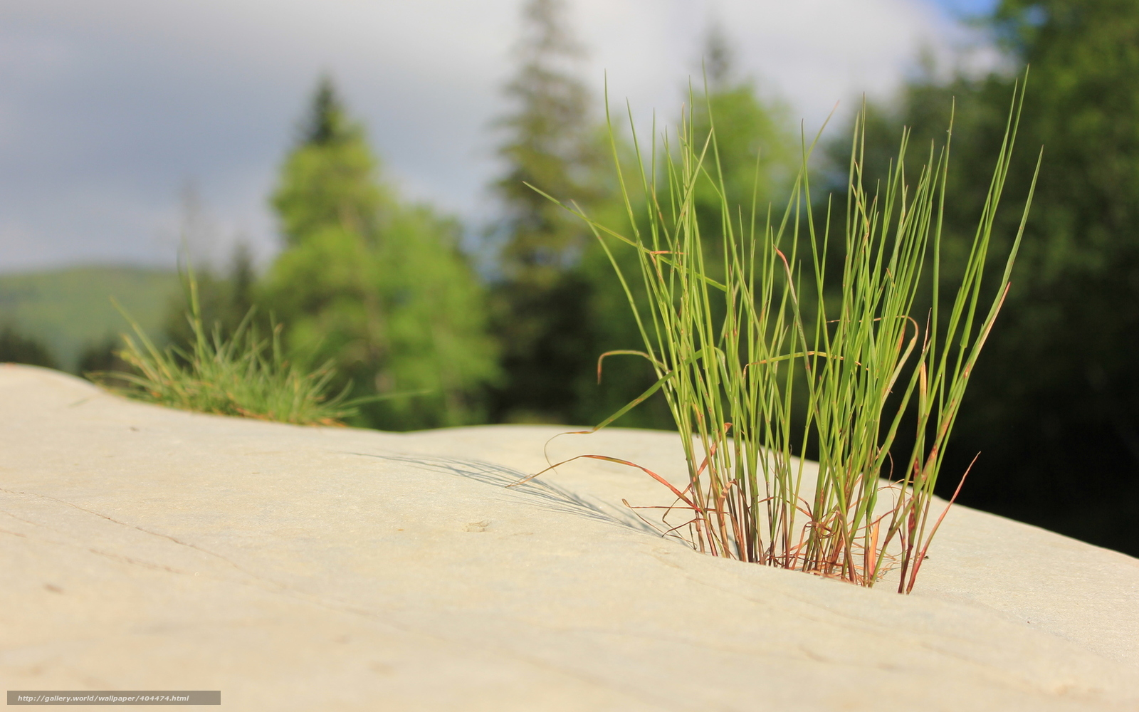 Tlcharger fond d 39 ecran noyaux herbe minimalisme zen for Bureau fond d ecran