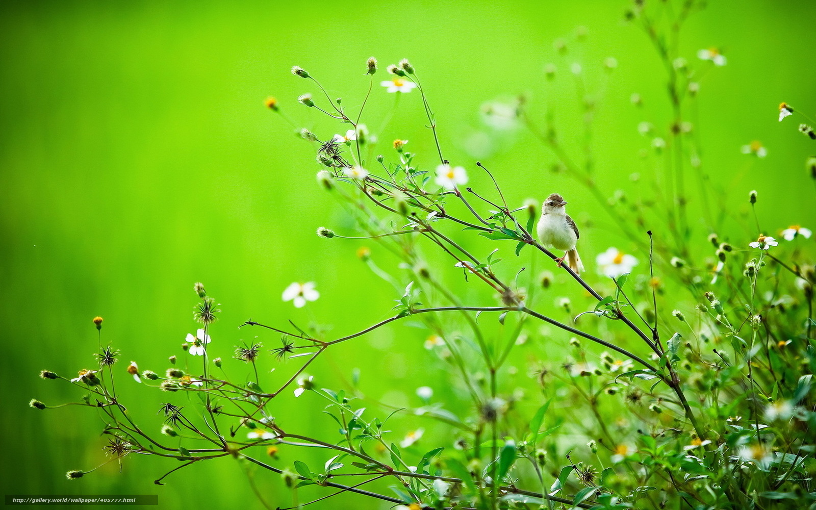 Download wallpaper summer, bird, branch, nature free desktop wallpaper in the resolution ...