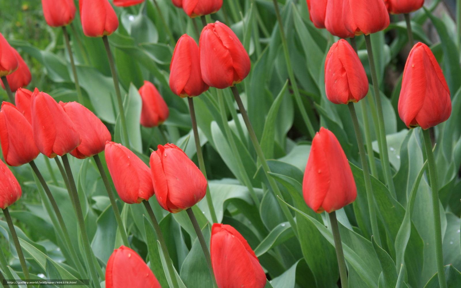 Весна Картинки и фото обои на рабочий стол  Времена года