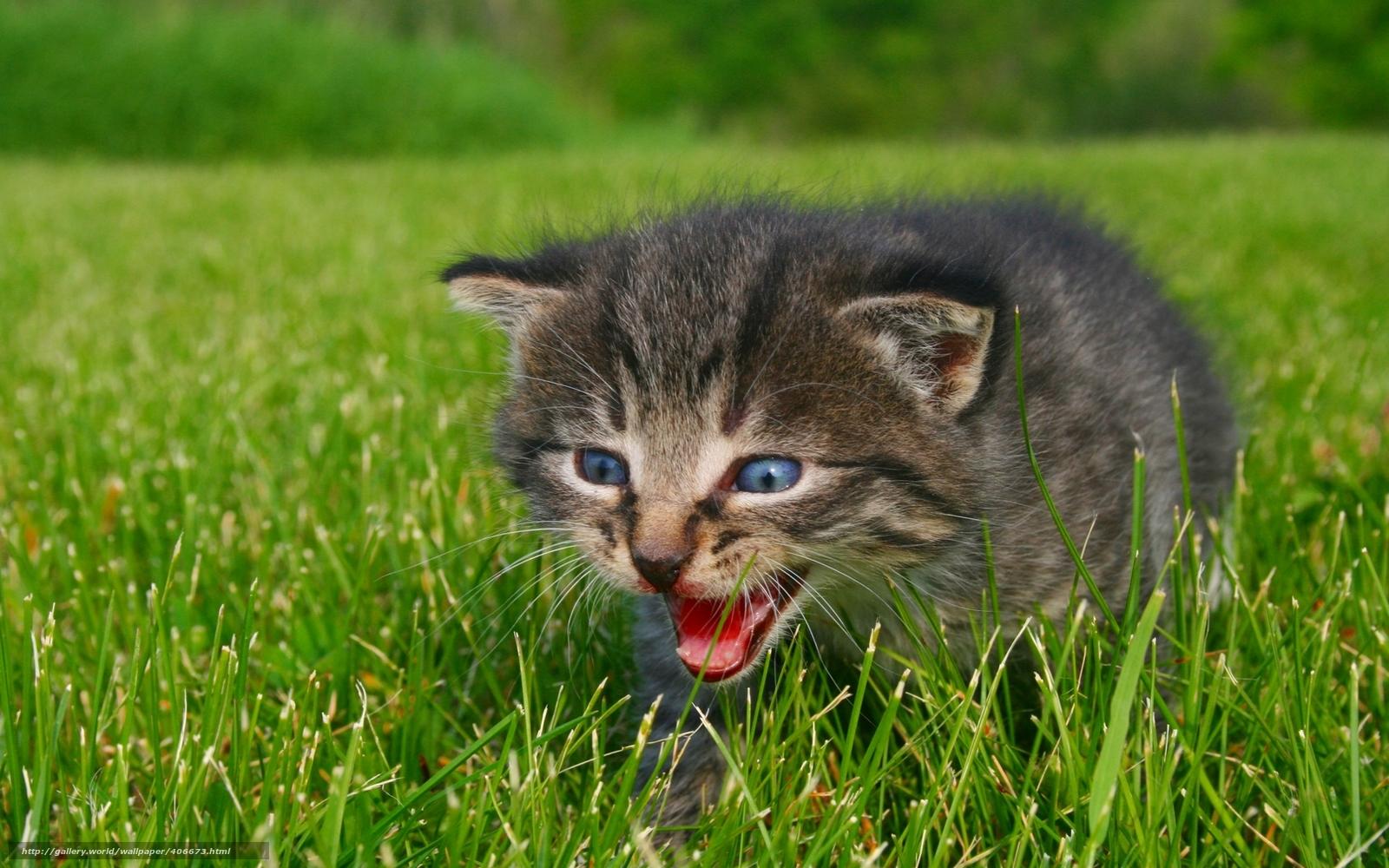 tlcharger fond d 39 ecran animaux chaton appeler pour maman nature fonds d 39 ecran gratuits pour. Black Bedroom Furniture Sets. Home Design Ideas