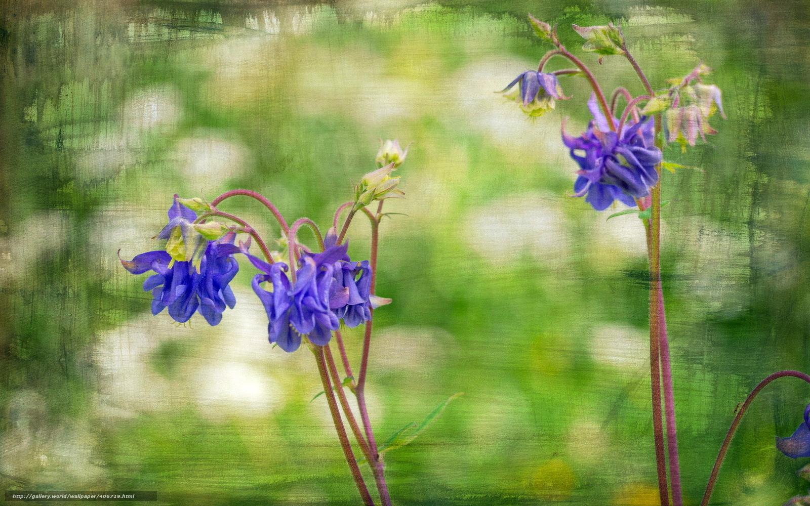 Tlcharger Fond D Ecran Fleurs Style Fond Fonds D Ecran