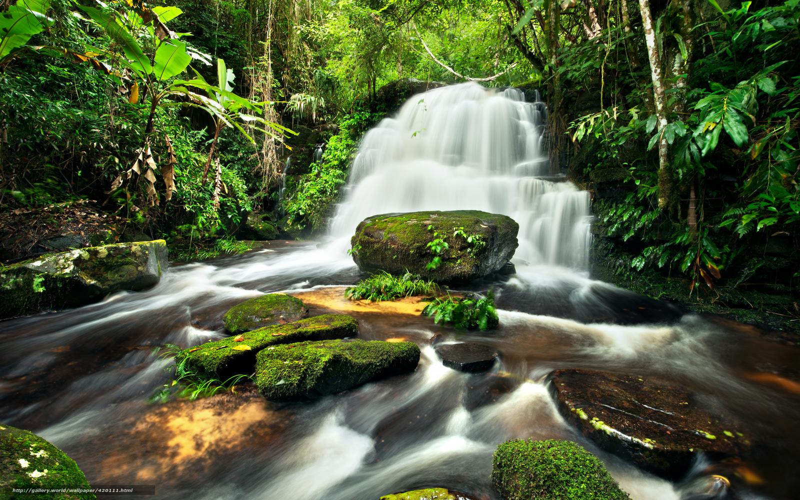 piedras, musgo, cascada, agua, montaa arroyo, deja, Los rboles